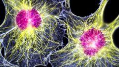 Что такое ключевые клетки