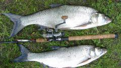 Как ловить рыбу спиннингом