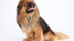 Как считать возраст собаки
