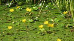 Почему цветет вода