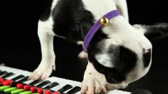 How to learn to play the synthesizer without music