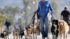 Как соблюдать правила выгула собак