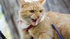 Как определить бешенство у кошки