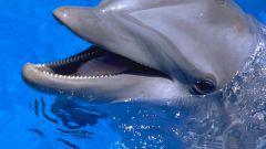 Как заказать билеты в дельфинарий