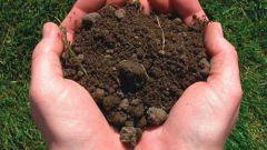 Как подготовить почву для выращивания цветов