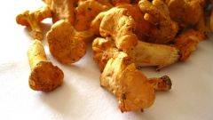 How to cook chanterelles