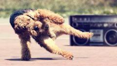 Как научить собаку танцевать