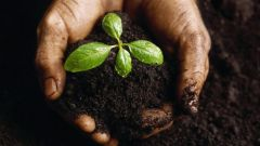 Для чего нужна растениям почва