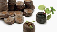 Как использовать торфяные таблетки для выращивания семян