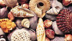 Как делать поделки из морских ракушек