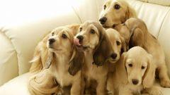 Как вывести запах собаки