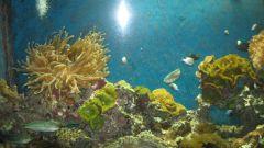 Как сделать аквариумную крышку