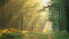 Как найти дорогу из леса