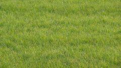 Как делать газон