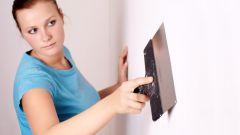 Как избавиться от грибка на стенах в квартире