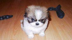 Что нужно для щенка в первые дни жизни