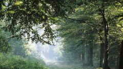Зачем нужны деревья