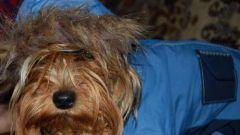 Как сшить одежду собаке