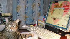 Как заработать в интернете лентяю