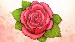 Как рисовать розу карандашом