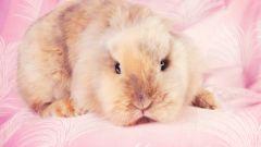Как назвать кролика-мальчика