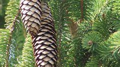Посадка деревьев: как провести ее правильно