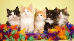 Как приучать котят к дому
