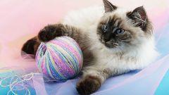 Как удалить кошачий запах