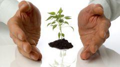 Как сажать рассаду