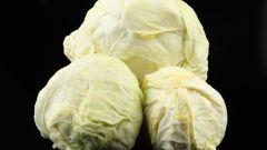 Как заквашивать капусту