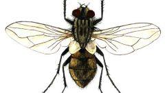Как сделать муху