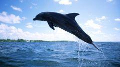 Как нарисовать дельфина
