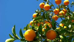 How to grow orange