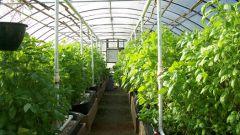 Как выращивать овощи в теплицах