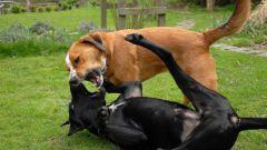 Как защитить собаку