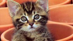 Как воспитать кошек