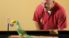 Как играть с попугаем