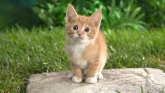 Как придумать котенку забавную кличку
