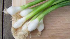 Как вырастить зелёный лук