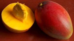 How to plant a mango seed,
