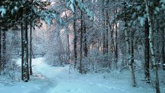 Как выжить в лесу зимой