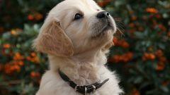 Как отучить собаку есть на улице