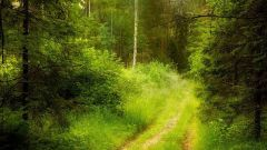 Как найти дорогу