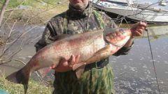 Как поймать большую рыбу