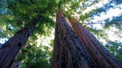 Как защитить природу