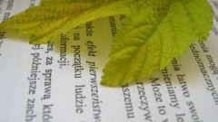 Как выровнять текст