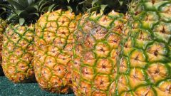 Как определить спелость ананаса