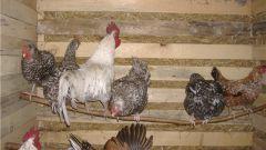 Как построить курятник для кур
