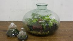 Как сделать сад в бутылке
