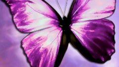Как вырастить бабочек